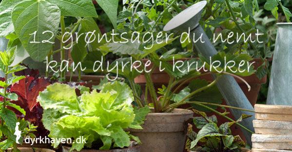 12 grøntsager du nemt kan dyrke i krukker - Dyrkhaven