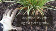 Del dine stauder og få nemt masser af nye gratis og sunde planter - Dyrkhaven.dk gør det nemt at dyrke din have