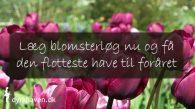 Læg blomsterløg i september og oktober og få den flotteste have til foråret - Dyrkhaven.dk gør det nemt at dyrke din have