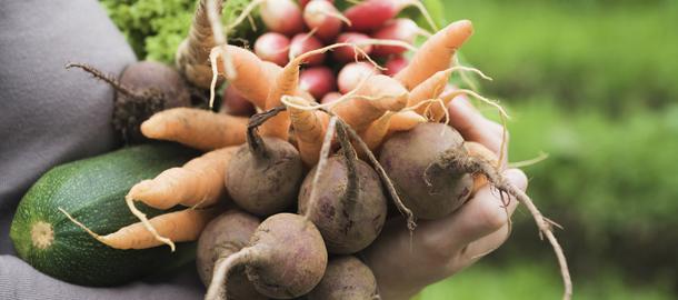 Tag den nemme vej til en spiselig og frodig have med de smarte startpakker .- Dyrkhaven.dk gør det nemt at dyrke din have