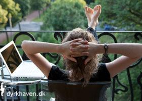 Læs hvad andre siger om Dyrkhaven.k - Dyrkhaven.dk gør det nemt at dyrke din have
