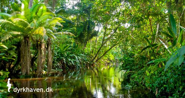 Red regnskov når du handler hos Dyrkhaven.dk - Dyrkhaven.dk gør det nemmere at dyrke din have