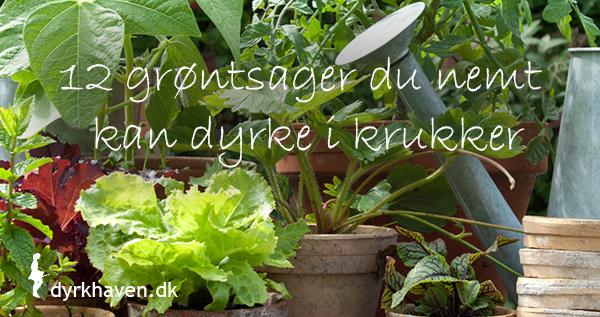 12 grøntsager du nemt kan dyrke i krukker - Dyrkhaven.dk gør det nemt at dyrke din have