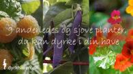 9 anderledes, sjove og nemme planter du selv kan dyrke i din have - Dyrkhaven.dk gør det nemt at dyrke din have