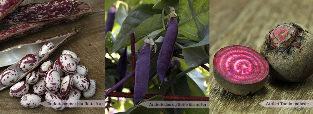 3 anderledes og sjove grøntsager til din have - Dyrkhaven.dk gør det nemt at dyrke din have