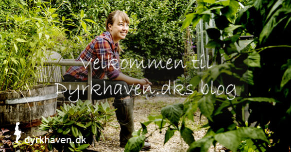Velkommen til Dyrkhaven.dks blog - Dyrkhaven.dk gør det nemmere at dyrke din have