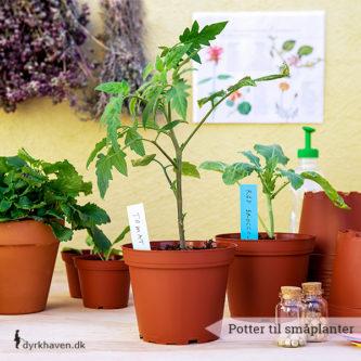 Plastikpotter som dine småplanter og spirer trives i, indtil de kan plantes udenfor - Dyrkhaven.dk gør det nemt at dyrke din have