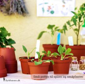 Små potter til at så direkte i eller ompotte spirer, som skal have mere plads - Dyrkhaven.dk gør det nemt at dyrke din have