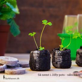 Såbrikker - jiffy pots - er den nemmeste måde at så på. Kan plantes direkte ud i jorden - Dyrkhaven.dk gør det nemt at dyrke din have