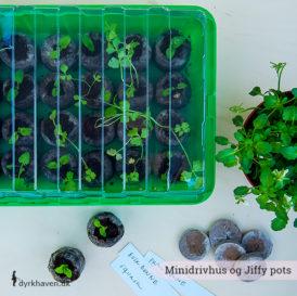 Minidrivhus og jiffy pots giver dine frø en optimale start - Dyrkhaven.dk gør det nemt at dyrke din have
