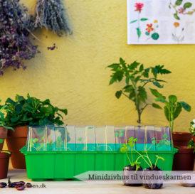Minidrivhuset giver dine frø og spirer den mest optimale start på livet. Passer perfekt til vindueskarmen - Dyrkhaven.dk gør det nemt at dyrke din have