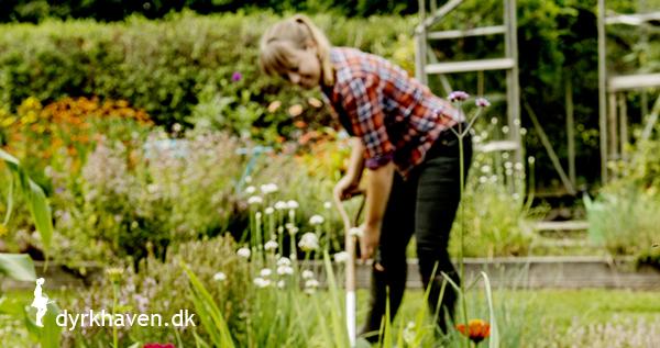 Om det online haveunivers Dyrkhaven.dk - Dyrkhaven.dk gør det nemt at dyrke din have
