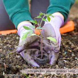 Såbrikker - Jiffy pots - kan plantes direkte ud i jorden i bedet eller krukken, når planten har vokset sig stor nok. På den måde forstyrrer du ikke plantens rødder - Dyrkhaven.dk gør det nemt at dyrke din have