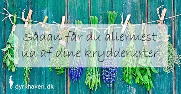 Sådan får du allermest ud af dine krydderurter - Dyrkhaven.dk gør det nemt at dyrke din have