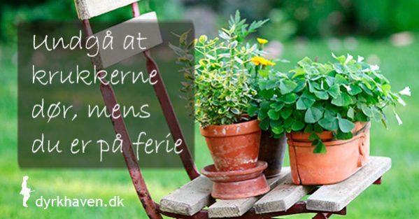 Få 4 nemme tips til at undgå, at dine krukkeplanter dør, mens du er væk på ferie - Dyrkhaven.dk gør det nemt at dyrke din have