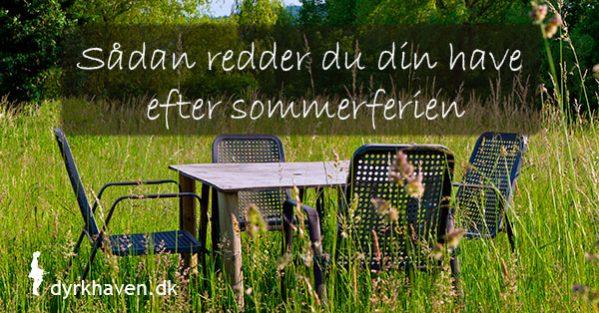 Få fire tips til at redde din have efter sommerferien - Dyrkhaven.dk gør det nemt at dyrke din have