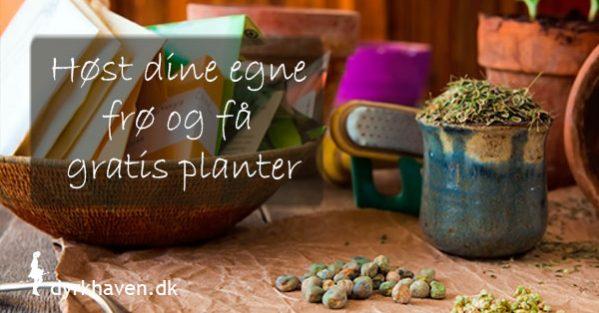 Sådan høster du dine egne frø og får gratis planter til foråret - Dyrkhaven.dk gør det nemt at dyrke dine have