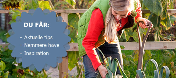 Tilmeld dig det gratis nyhedsbrev og få aktuelle havetips - Dyrkhaven.dk gør det nemt at dyrke din have