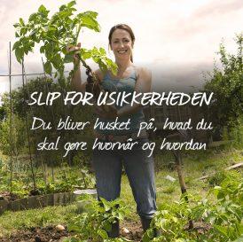 Slip for usikkerheden - Bliv husket på, hvad der er det vigtigste at gøre i haven lige nu, og hvordan du gør det nemmest i Klub Dyrkhaven