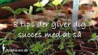 Få 8 tips der giver dig succes, når du skal så frø - Dyrkhaven.dk gør det nemt at dyrke din have