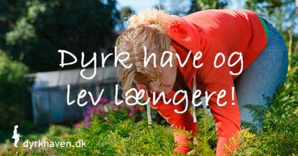 En halv times daglig havearbejde sænker din dødelighed betragteligt - Dyrkhaven.dk gør det nemt at dyrke din have