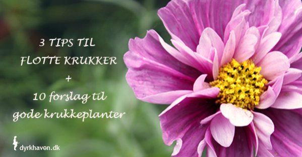 Få tre tips til at plante dine krukker og 10 forslag til flotte krukkeplanter - Dyrkhaven.dk gør det nemt at dyrke din have