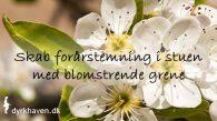 Skab forårstemning i din stue med blomstrende grene fra haven - Dyrkhaven.dk gør det nemt at dyrke din have