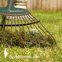Kan mos fra græsplænen kommes i komposten? Få svaret i Dyrkhaven.dks brevkasse