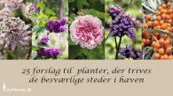 25 forslag til planter til problemområder i haven - Dyrkhaven.dk gør det nemmere at dyrke din have