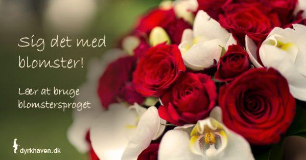 Sig det med blomster - lær blomstersproget og sig alting med en buket - Dyrkhaven.dk gør det nemt at dyrke din have