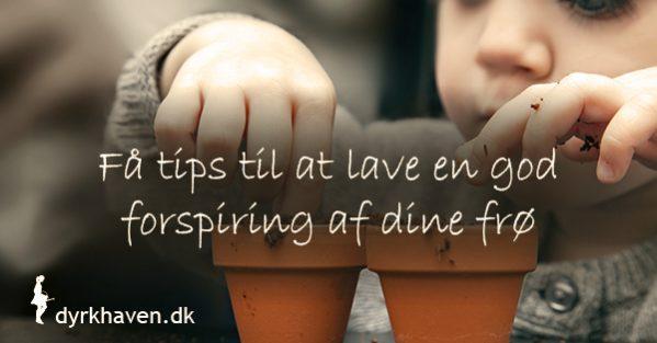 Nem opskrift på at forspire dine frø inkl. de 3 vigtigste ting du skal vide for at få succes - Dyrkhaven.dk gør det nemt at dyrke din have