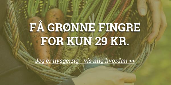 Få grønne fingre og styr på din have med Klub Dyrkhaven. prøv for kun 29 kr. i 30 dage - Dyrkhaven.dk gør det nemmere at dyrke din have