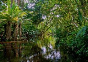 5% af dit medlemskab af Klub Dyrkhaven går til at redde skov herhjemme og i troperne