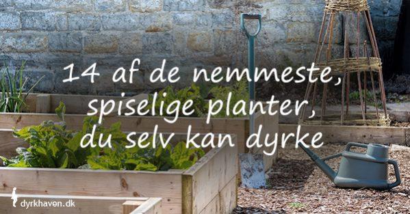 Forslag til 14 af de nemmeste, spiselige planter, som du selv kan dyrke - Dyrkhaven.dk gør det nemt at dyrke din have