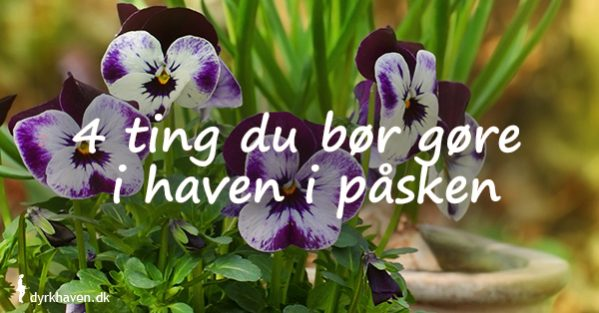Få forslag til 4 ting du kan gøre i haven i påsken - Dyrkhaven.dk gør det nemt at dyrke din have
