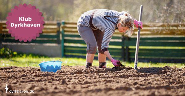 3 trin til at gøre din jord klar til at blive sået i - Klub Dyrkhaven gør det nemmere at dyrke din have