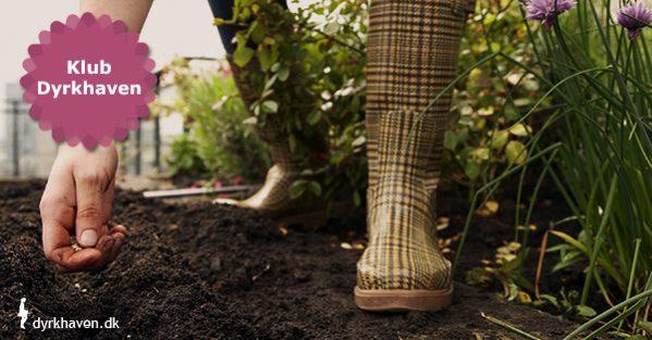 Guide: Sådan sår du frø udenfor - Klub Dyrkhaven gør det nemmere at dyrke have