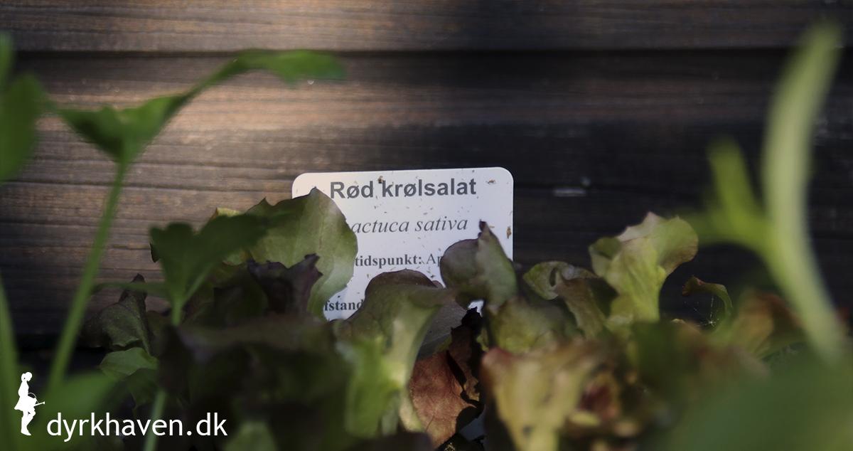 Sørg for at der er planteskilt i de bakker, du køber med udplantningsplanter - Klub Dyrkhaven gør det nemt at dyrke have