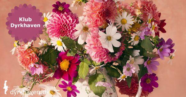Lav dit eget buketbed fuld af sommerblomster og få fyld huset med buketter hver eneste uge til meget billige penge - Klub Dyrkhaven gør det nemmere at dyrke have