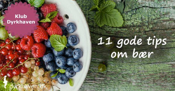 11 gode tips der gør det nemt og sjovt at dyrke bær i haven - Klub Dyrkhaven