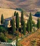 Få 4 forslag til høje, slanke træer som de cypres Preben så i Toscana - Dyrkhaven.dks brevkasse