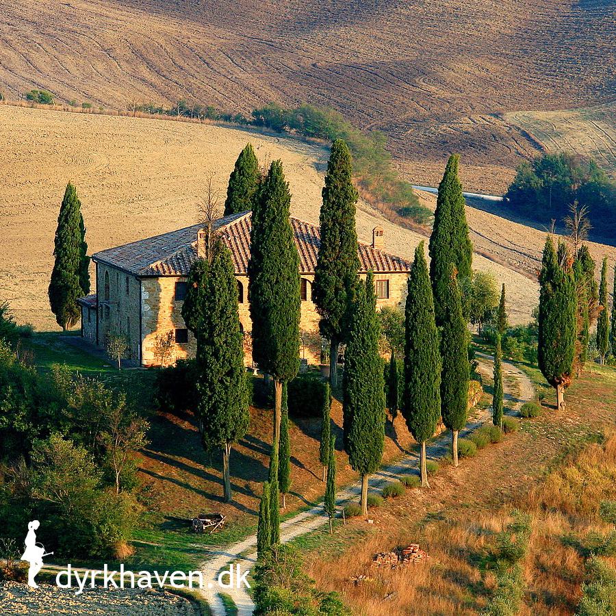 Forslag til høje, slanke træer som dem i Toscana