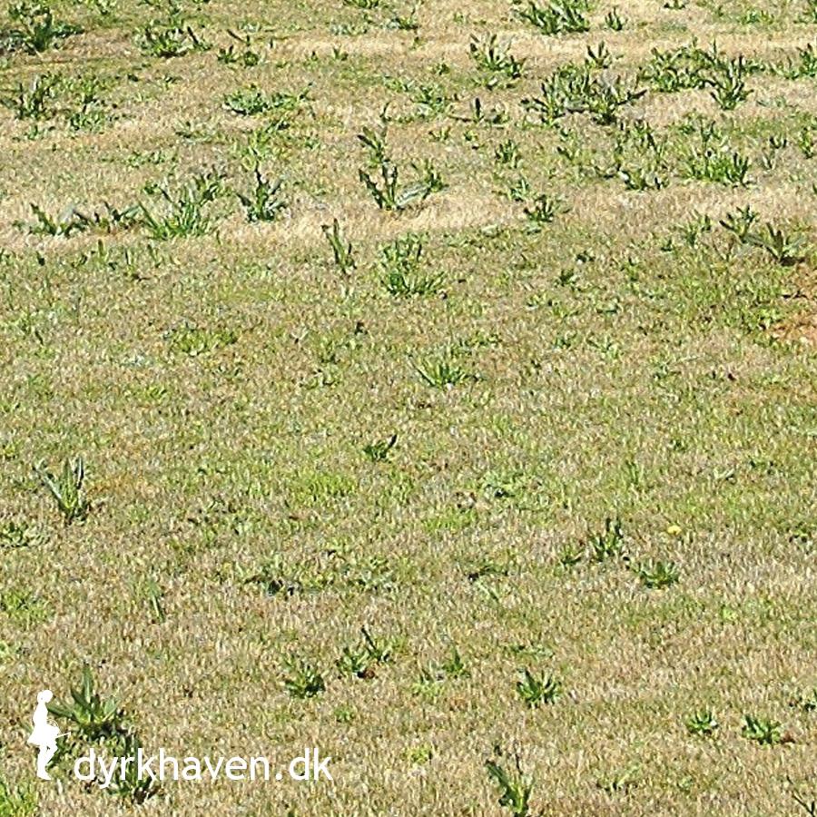 Hjælp – min græsplæne er tyndhåret!