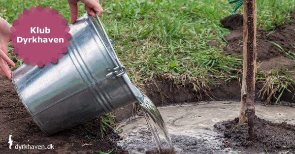 I august måned er jorden så tør, at det ikke er smart at plante ret meget, medmindre du har tid til efterfølgende at vande det - Klub Dyrkhaven gør det nemmere at dyrke din have