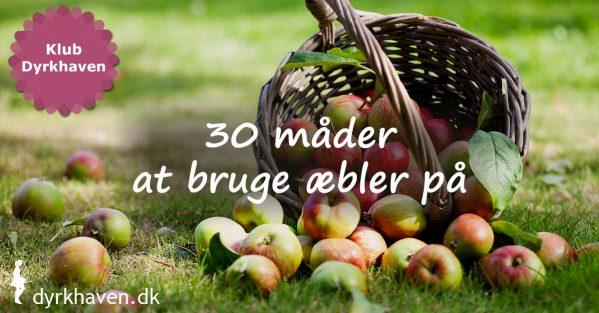Vi kan nemt få for mange æbler, når først de alle modner på æblertræerne. Få 30 idéer til at bruge æbler på her - Klub Dyrkhaven gør det nemmere at dyrke din have