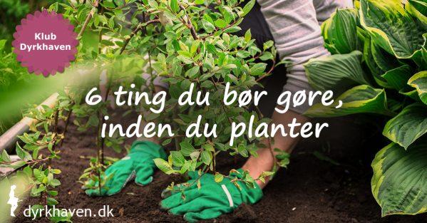 6 tips som du bør følge, inden du planter for at give planten en meget bedre start og få en meget bedre plante - Klub Dyrkhaven gør det nemmere at dyrke have