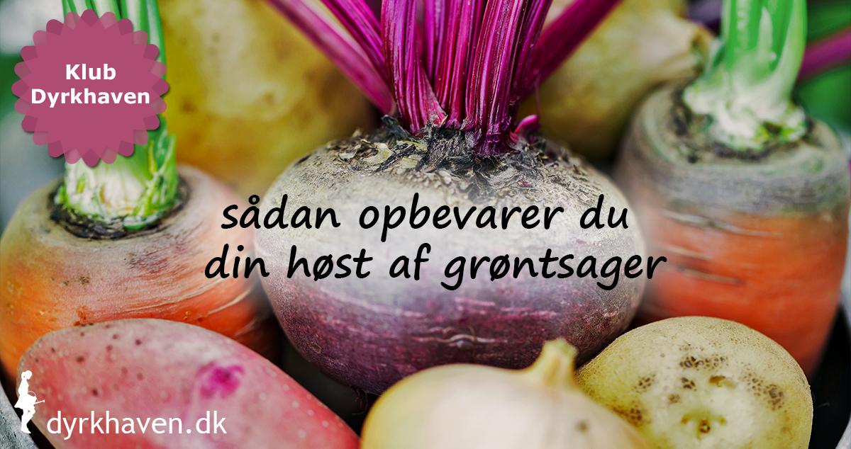Picture of: Sadan Opbevarer Du Din Host Af Grontsager Klub Dyrkhaven