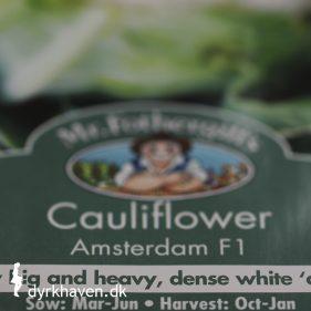 Hvad betyder det, at frø er F1, og passer det, at man ikke skal så frø fra F1-planter? - Klub Dyrkhavens Brevkasse hjælper dig med udfordringerne i din have