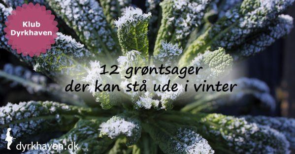 Nogle grøntsager har bedre af at blive stående ude i haven om vinteren. Se 12 af dem her - Klub Dyrkhaven gør det nemmere at dyrke din have