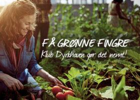 Bliv medlem af Klub Dyrkhaven og få en hjælpende hånd til at skabe en fantastisk have